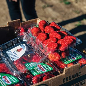 Giant Berry Farms Strawberries