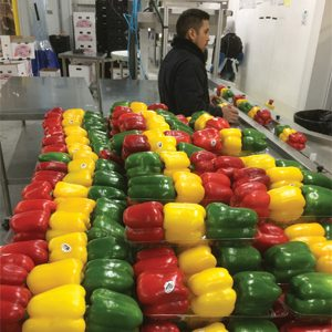 Bell Peppers from Southern farms