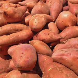 Sweet Potatoes grown in The South