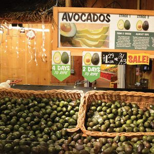 Avocado Sale