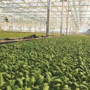 BrightFarms Greenhouses