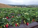 Organic Berries: Supply and Demand Grow Sales