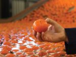 Expand Summer Sales with South African Citrus