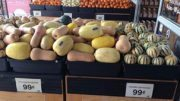 Seasonal Best Squash