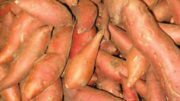 A Dozen Ways to Grow Sweet Potato Sales