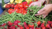 The Pulse Of Fall Produce From Florida