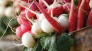 Grow Root Vegetable Sales from the Ground Up