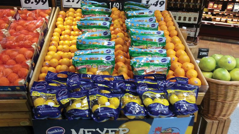 Meyer Lemons Display