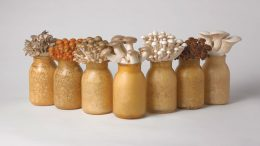Mycopia Row of Bottles