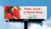 Florida Strawberry Report