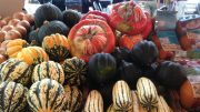 Winter Squash Brightens Produce Shelves
