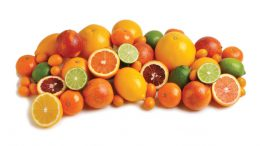 Winter Citrus Grouping