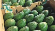 Mexican Avocado Promotions Spanning the US and Canada