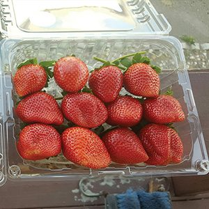 Strawberry Carton