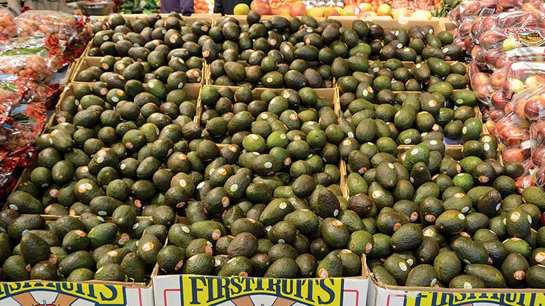 Pathmark bus tour 2014 Avocados