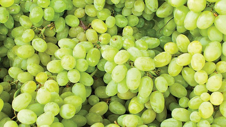 Seamless Supply of Spring Grapes, Produce Business