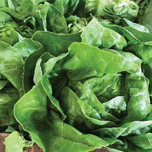 Lettuce_VinelandProduce