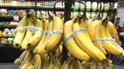 Bananas Are Organics Standout