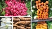 Root Revival: Veggies Back In Vogue