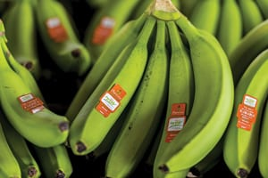 Six Ways To Boost Banana Sales - Produce Business