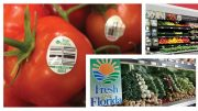SUNSHINE STATE'S SPRING PRODUCE SHINES
