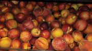 SOUTHEAST PEACHES
