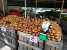 Sweet Deal: Onions offer big potential year-round
